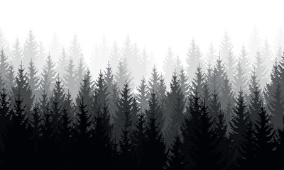 Vector landscape with grey silhouettes of coniferous trees in the mist