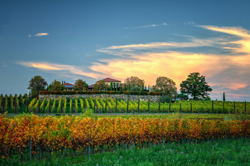 vineyard in the autumn near Freinsheim
