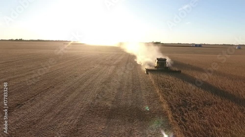 farmer combining bean field in rural midwest United States