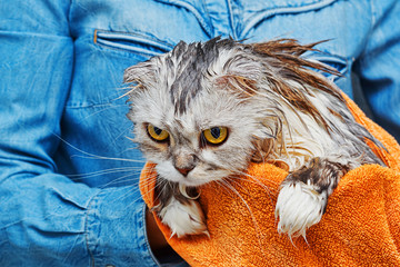 Just washed angry cat