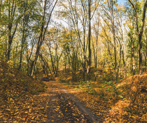 Walking in autumn colors in the forest. Forest lane in autumn colors. Fairy colorful forest.