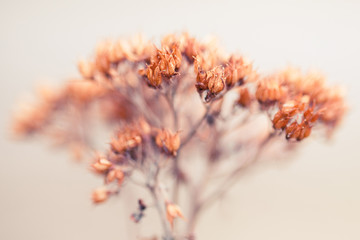 Macro of tiny dried flowers in winter