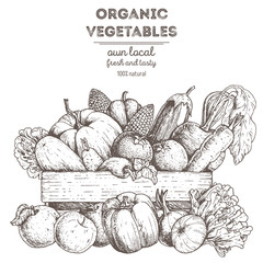 Harvest of vegetables in the basket. Hand drawn vector illustration. Engraved style.