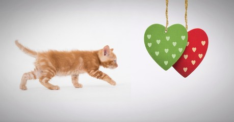 Kitten walking with hearts hanging