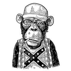 Monkey redneck in trucker cap, t-shirt with flag Confederate.