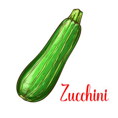Zucchini squash vector sketch vegetable icon