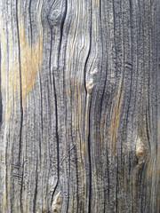 Close up of dead old growth Sierra Juniper tree