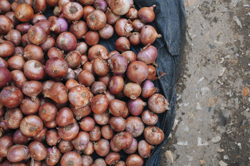 Onions laid out on the street for sale in Asia.