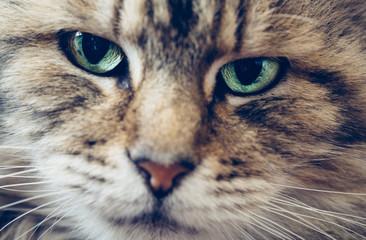 Macro closeup of a cats face
