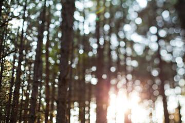 Forest Bokeh