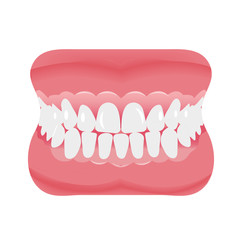 Jaw with teeth icon flat style. Open mouth, dentures. Dentistry, medicine concept. Isolated on white background. Vector illustration