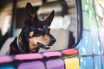Cute Dog inside a Van