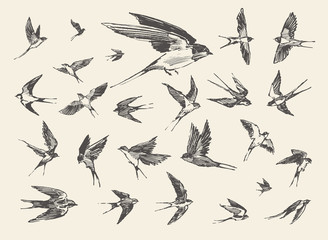 flock birds flying swallows drawn vector sketch