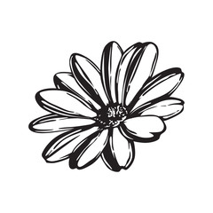 FLOWER HAND DRAWING