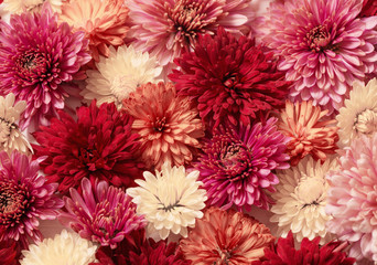 the  background with chrysanthemums