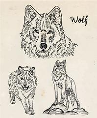 Beautiful illustration of wolf on vintage background