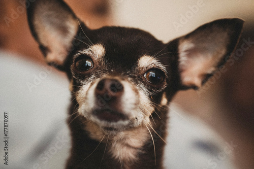 perra stock photo and royalty free images on fotolia com pic