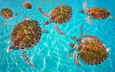 Poster Caraïben Riviera Maya turtles photomount on Caribbean