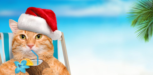 Cat sitting on deckchair and enjoying a cocktail relaxing sitting on deckchair in the sea background. Christmas.