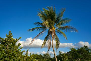 Holbox island palm tree beach in Mexico