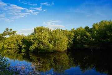 Holbox Island mangroove Quintana Roo Mexico