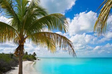 Holbox Island paradise beach palm tree Mexico