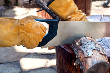 Man's hands cut a tree trunk with a hand saw