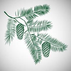 Hand drawn pine tree branch