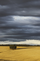 the lonely tree in the fields with a cloudy sky
