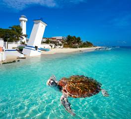 Papiers peints Caraibes Puerto Morelos turtle photomount Riviera Maya