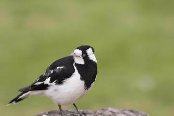 Bird with Blurry background