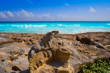 Mexican iguana on sculpture in Riviera Maya