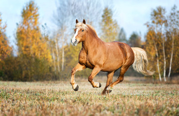 Red horse running free.