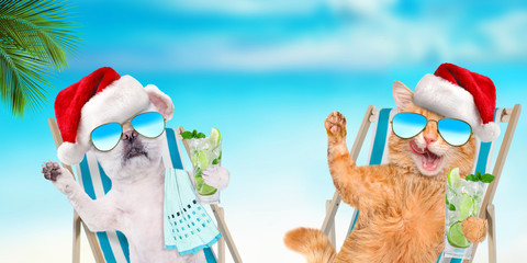 Cat and dog relaxing sitting on deckchair with cocktail on the in the sea background. Christmas.