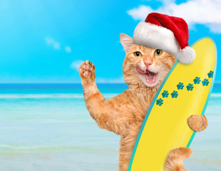 Beautiful surfer cat wearing sunglasses relaxing in the sea .  Christmas.