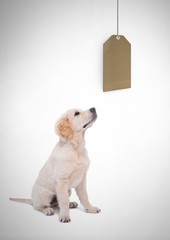 Dog watching price gift tag