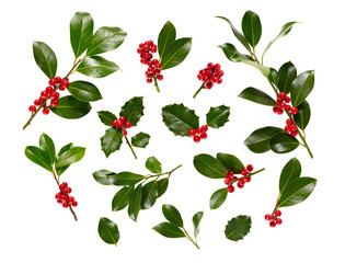 Christmas Holly With Red Berries On White.