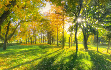 Beautiful autumn background with sunlight and shadows in a park, in fall season