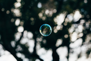 One colourful bubble floating in front of dark trees