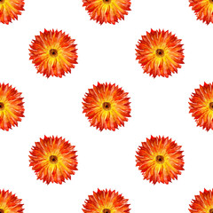 Seamless pattern with marigold