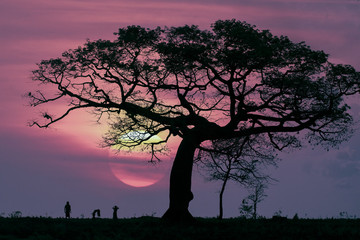Three people dance beneath a silhouette of a tree as the sun sets