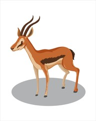 Realistic Gazelle-vector drawing-isolated white background