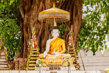 Buddha statue sitting under Bodhi tree