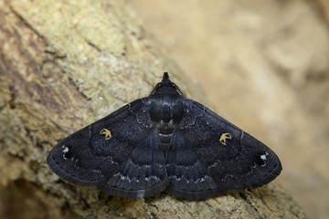 Image of black butterfly(Moth) on tree. Insect. Animal.
