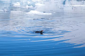 Antarctic Landscape.
