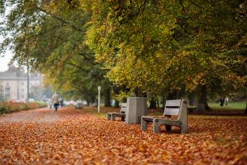 Autumn mood. Streets and benches covered with leaves in Gdynia, Poland