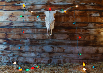 A longhorn skull hanging on a rustic wall decorated with Christmas lights