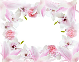 Magnolia flowers and roses isolated on white background
