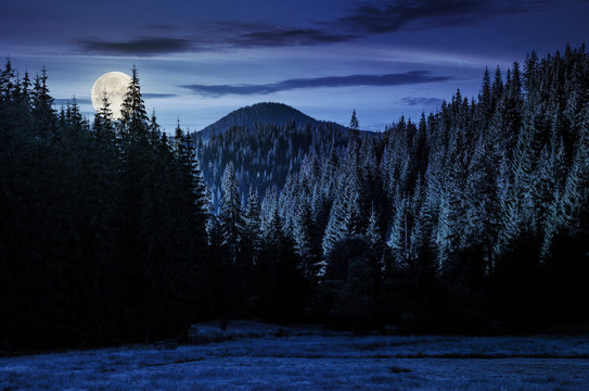beautiful nature scenery in mountains with spruce forest at night in full moon light