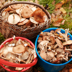 Successful mushroom hunting in the autumn forest